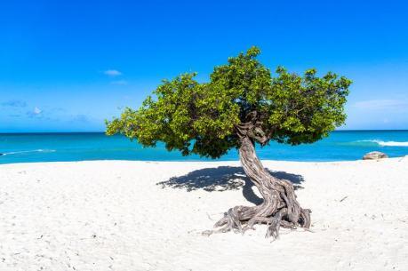 Aruba_shutterstock_136834316_800x
